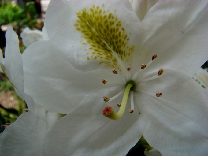 toutes les fleurs de couleur blanche  Dsc02635