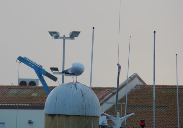 ponts et oiseaux Dsc03030