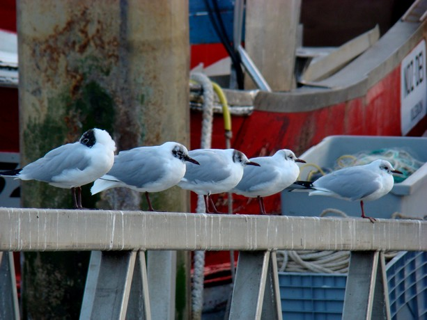 ponts et oiseaux Dsc03031