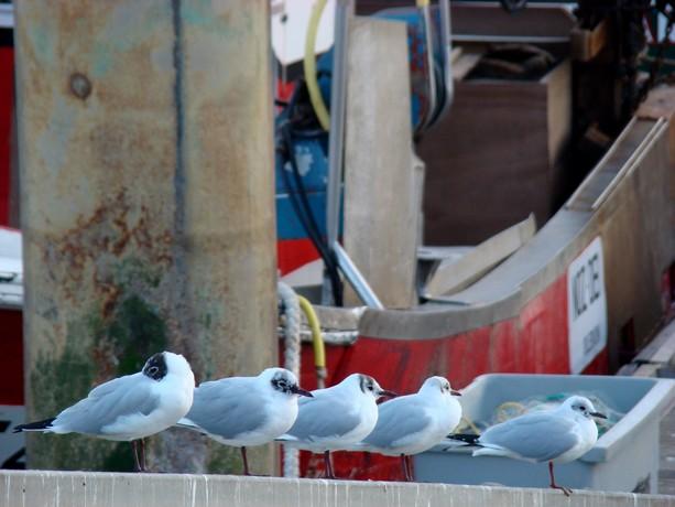 ponts et oiseaux Dsc03032