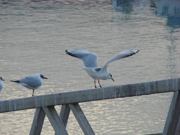 ponts et oiseaux Dsc03033