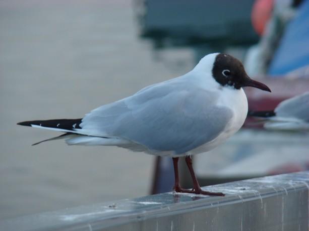 ponts et oiseaux Dsc03034
