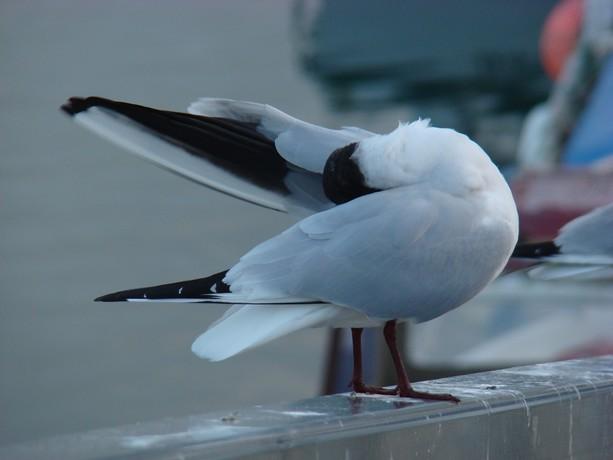 ponts et oiseaux Dsc03035
