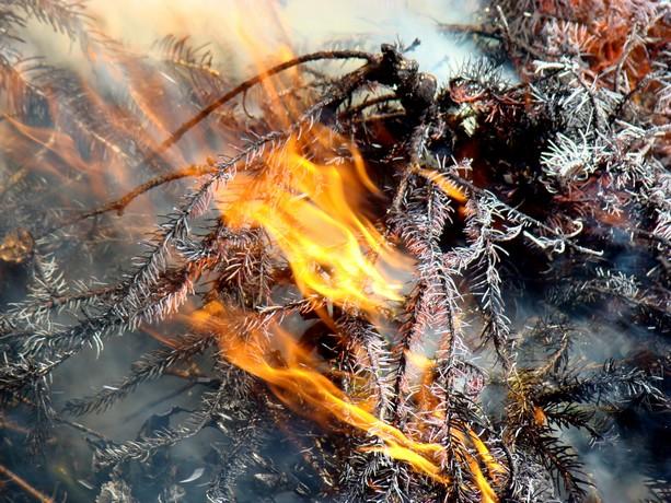 le feu ,j'aime même si parfois on préfére ne pas le voir arriver Dsc07114