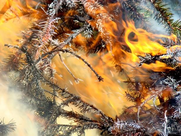 le feu ,j'aime même si parfois on préfére ne pas le voir arriver Dsc07115