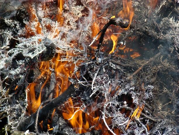 le feu ,j'aime même si parfois on préfére ne pas le voir arriver Dsc07118