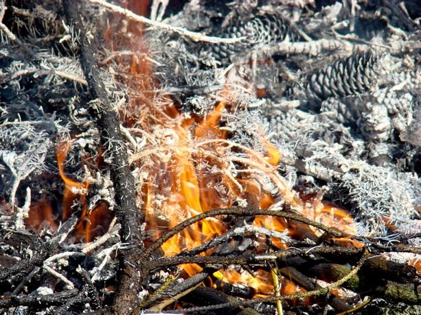 le feu ,j'aime même si parfois on préfére ne pas le voir arriver Dsc07119