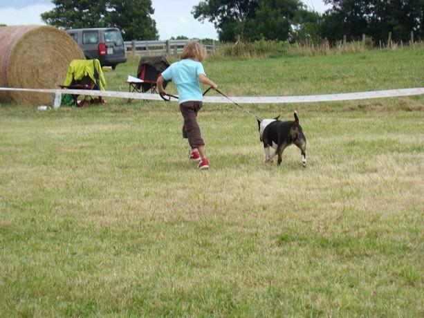 expos de bulls terriers Dsc07817