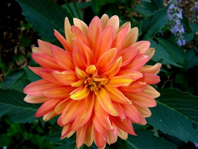 photos fleurs de marie (album 2) Dsc07961