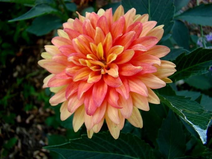photos fleurs de marie (album 2) Dsc07962