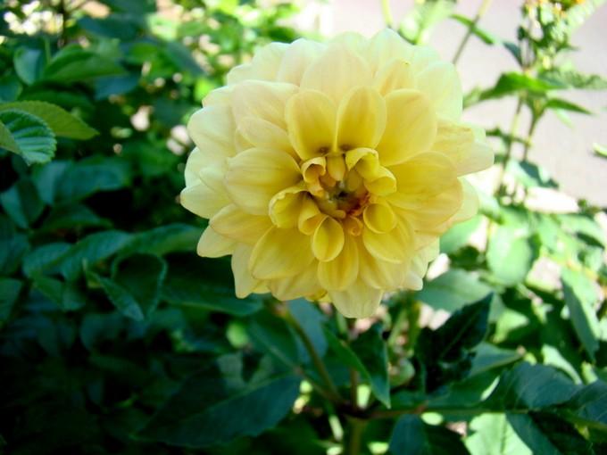 photos fleurs de marie (album 2) Dsc07964
