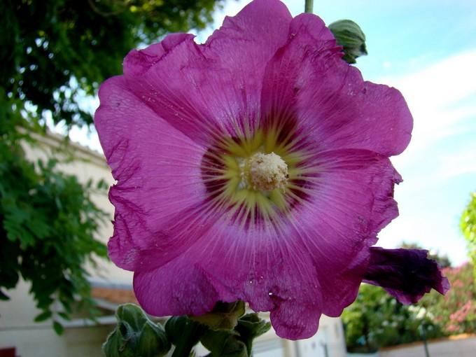 photos fleurs de marie (album 2) Dsc07965