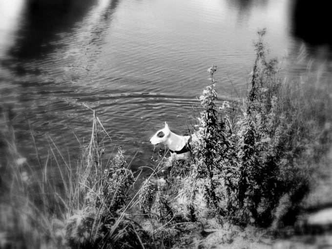 noir et blanc Dsc09315