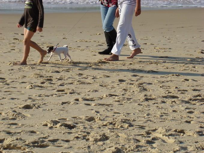 biscarosse fin octobre 2011,dune du pyla Dsc09631