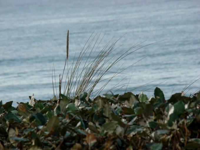 biscarosse fin octobre 2011,dune du pyla Dsc09919