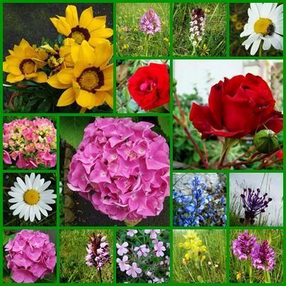 une image ,des photos Fleurs40