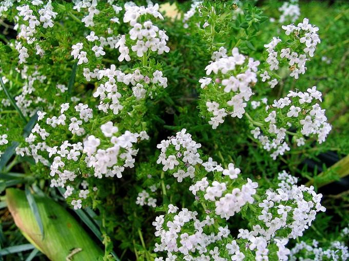 toutes les fleurs de couleur blanche  Img_0168
