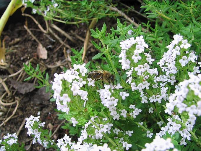 toutes les fleurs de couleur blanche  Img_0170