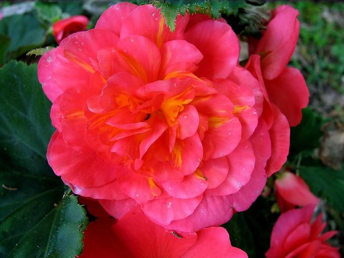 toutes les fleurs de couleur roses et rouges - Page 2 Img_0291