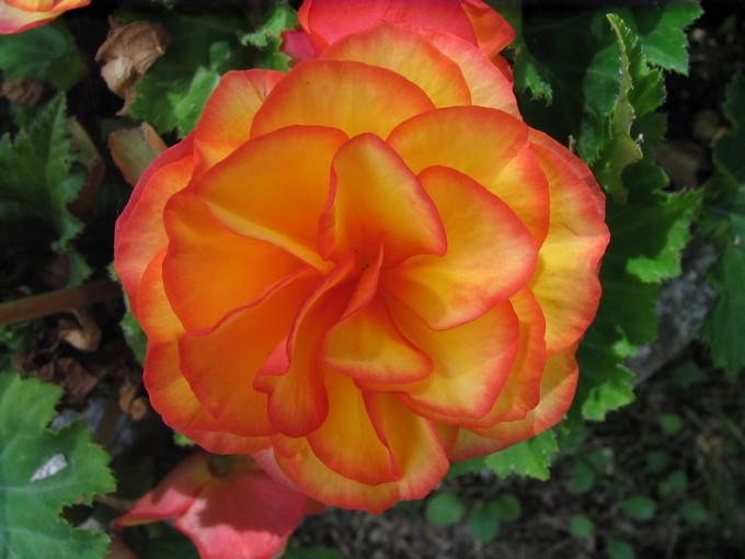 toutes les fleurs de couleur roses et rouges - Page 2 Img_0292