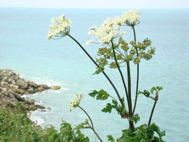 mon voyage en normandie, Courseuilles, Arromanche, OMAHA, Port en Bessin, Douvres la Delivrande Le_cha10