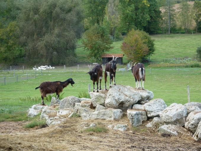 la ferme des vallées P1050819
