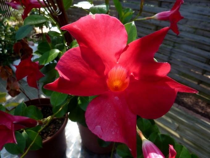 photos fleurs de marie (album 2) P1050828