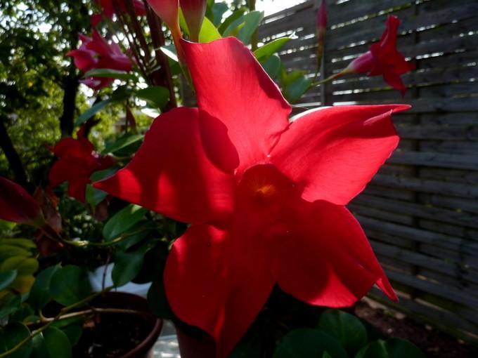 photos fleurs de marie (album 2) P1050829