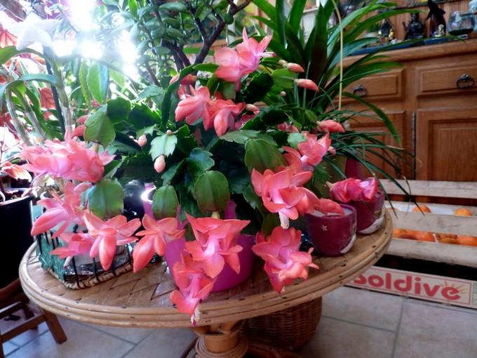 photos fleurs de marie (album 2) P1060524