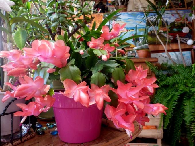photos fleurs de marie (album 2) P1060525
