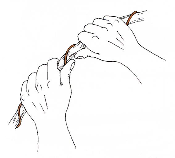 Sorbier des oiseleurs en lettré - Page 2 Sans-t15