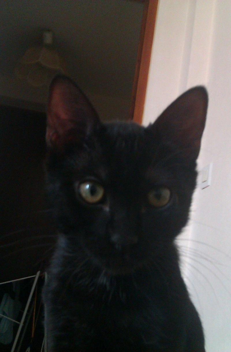 Perdu chat noir- Cugnaux 09/12/11 Perduc14