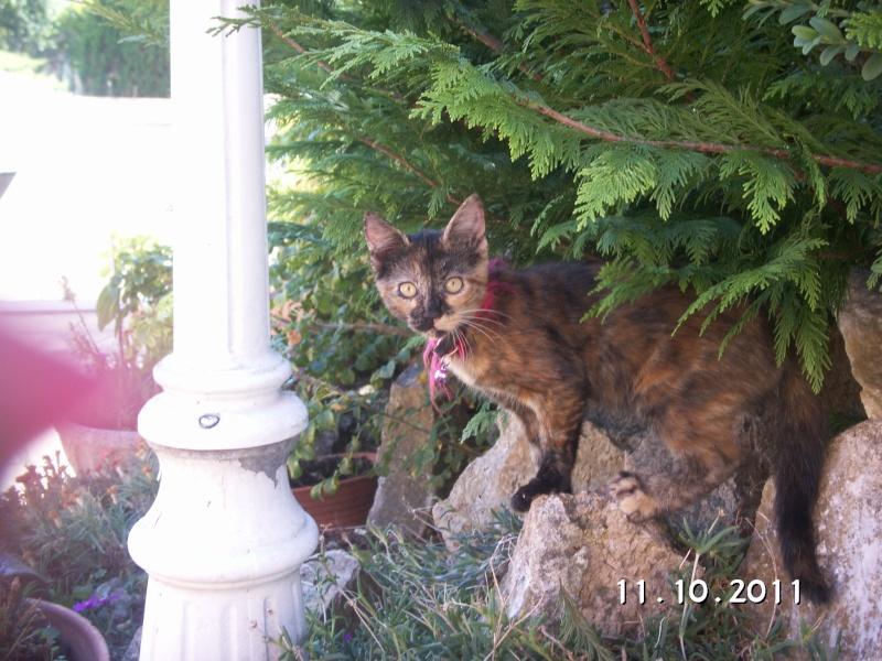 Trouvé chaton tricolore - Colomiers 0810/11 Trouve20