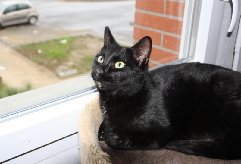 Trouvé chat noir à Lèguevin Trouve25