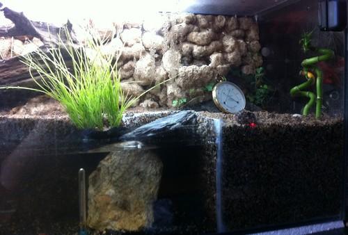 Aqua-terrarium de Syllare  Img_0330