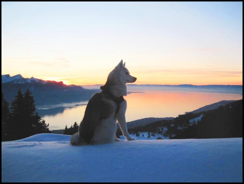 Saskia dans la neige en décembre 2011 Chienn10