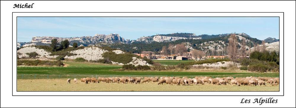 Les balades 2013 d'un Ophrysien... Img_0113