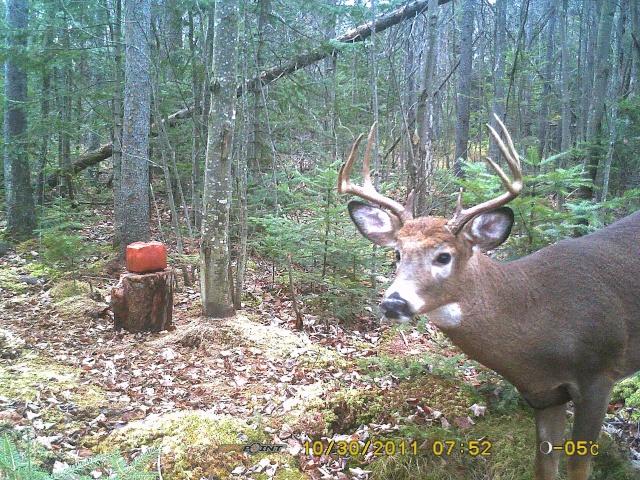 beau buck!!! Bucks_10