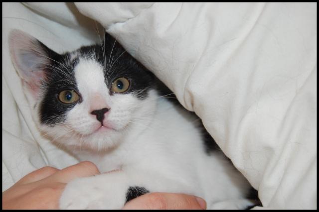 Betty Boop, 2.5 mois  RESERVE Bettyb14