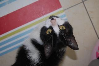 Mélynda, 1.5an noire et blanche, taillader au rasoir - Page 2 Dsc_0415