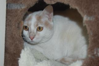 Kali, 4 ans, rousse et blanche Dsc_0436