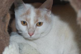 Kali, 4 ans, rousse et blanche Dsc_0437
