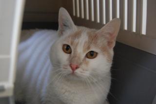Kali, 4 ans, rousse et blanche Dsc_0447