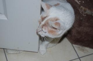 Kali, 4 ans, rousse et blanche Dsc_0448