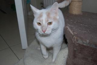 Kali, 4 ans, rousse et blanche Dsc_0449