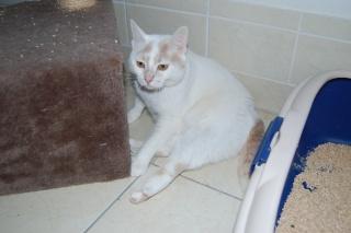 Kali, 4 ans, rousse et blanche Dsc_0451
