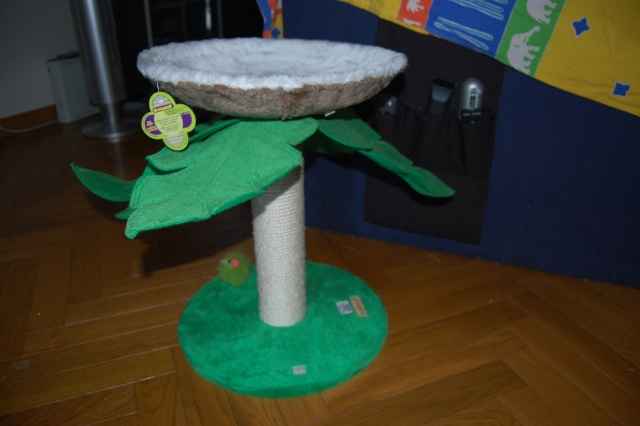 griffoir, arbre à chat, ... pour Pimousse et Cassy Dsc_0516