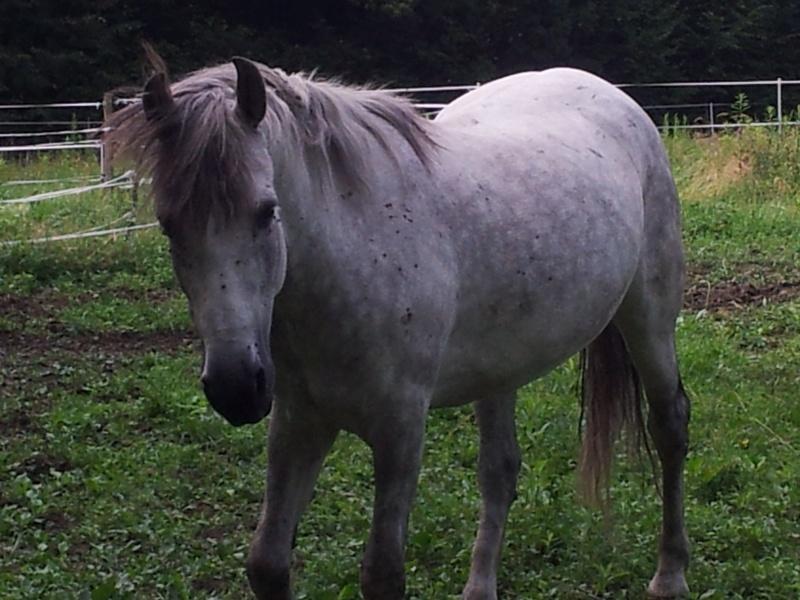 POMMELEE D'AMOUR - ONC Selle née en 1992 - Adoptée en juillet 2011 par Shamane - Page 3 20120710
