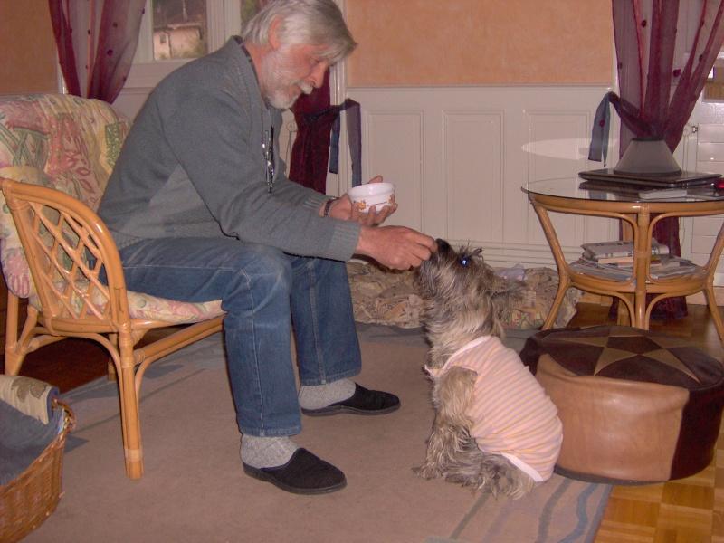 Alinka    cairn terrier - Page 2 Alinka39