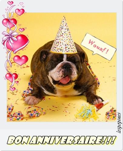 Joyeux anniversaire aux 4 pattes en février 2012 Annive20